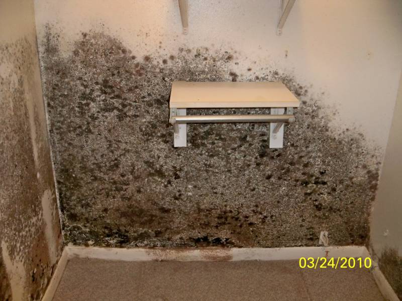 Mold In Bedroom Mold In Bedroom  Educationphotography